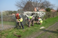 BTCV hedge laying at Misterton