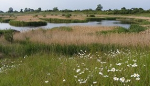 Langford Lowfields reedbed in summer. Photo: Michaeol Copleston, RSPB