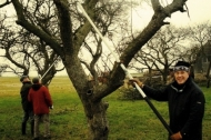 Training course in pruning of traditional orchards