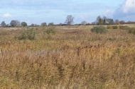 Reedbed at Langford Lowfields. Photograph: Carl Cornish