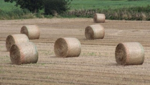 Bales drying in a field in Bassetlaw. Photograph Barry Coward