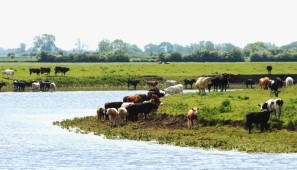 Traditional grazing landscape of the Trent Vale Holmes.