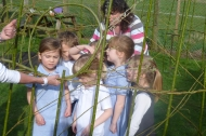 Creating a willow dome at Norwell School