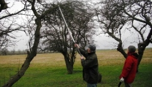 Local volunteers learning skills in traditional fruit tree pruning